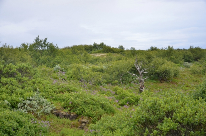 Keře a keříky tvoří přírodu v okolí. Občas se najde i zakrslý strom. O kus dál však roste i les.