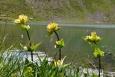 Květy, kvítky, rostlinky. Stále je no co se dívat, stále je co obdivovat.