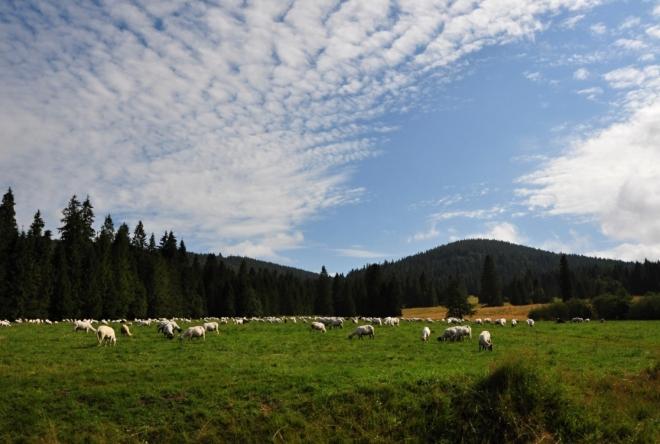 Beránci na nebi, ovečky na zemi.