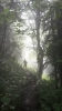 Tajemný les v Karpatech.