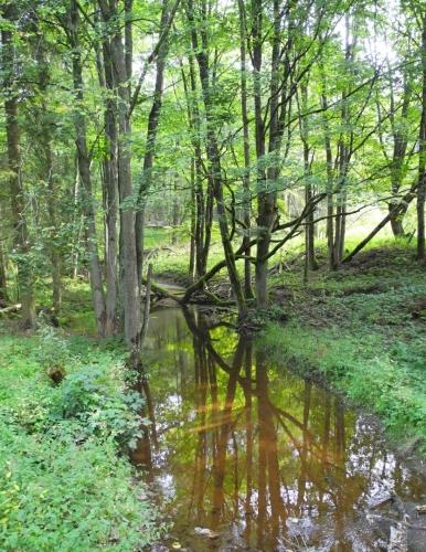 Hraniční potok.