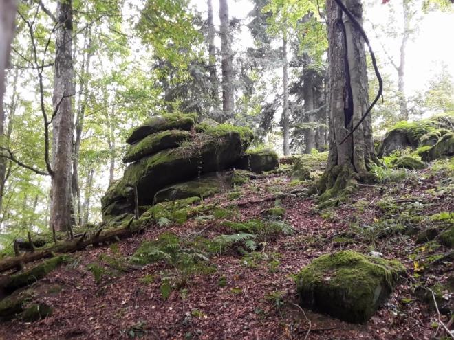 Černy les...