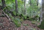 Černý les.