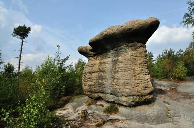 Kamenné hřiby...