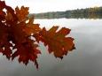 Staré jezero je přírodní rezervací. Dub červený je jedním z mnoha druhů listnatých stromů na hrázích rybníků.