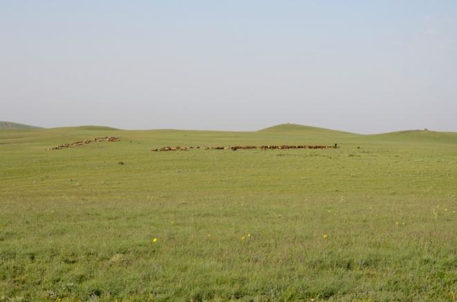 Pastevcům a jejich táborům se dnes vyhýbáme, jak jen můžeme, ideálně aspoň o půl kilometru.