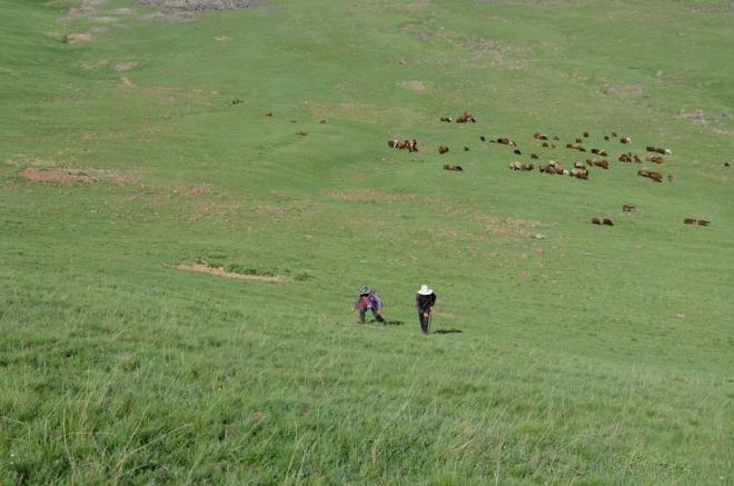 Na chvíli jsme se zastavili a čekáme na pastevce, kteří se k nám rozhodli vydrápat.
