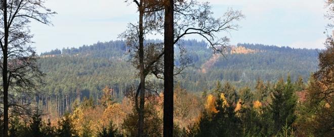 Výhled na nedaleký Olešnický vrch (499 m n. m.).
