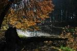 Starý rybník je utopený v žlabu mezi kopci.