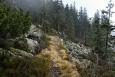 Dámská cesta by si rozhodně zasloužila být znovu turistům přístupná. Být to za hranicemi v Bavorském lese, nebyl by to vůbec žádný problém. U nás jsou však turisté a přírodumilovní lidé na obtíž.