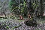 Ohledání stromy u říčky.