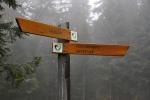"""Nejen tyto značené trasy, ale i ostatní cesty a stezky jsou turistům v NP Bavorský les v době od 15. 7. do 15. 11. zcela otevřeny. Dokonce i v nejcennějším """" jádrovém území"""", tzv. Kerngebietu. U nás v identických l. zónách něco takového neexistuje. Velké atraktivní plochy Šumavy tak jsou turistům zcela zbytečně uzavřeny. Výmluvy na klid kvůli tetřevům jsou opravdu jen výmluvami. Mnohem větší populace tetřeva obývala Šumavu v době, kdy na ní žilo mnohonásobně více lidí a tehdy se dokonce tetřev lovil. Kde je tedy pravda? Pokud začal postupně vymírat, jistě to nebylo proto, že ho občas vyplašili lidé. Důvod mohl být ve vysázených monokulturních stejnověkých smrčinách. Ty v l. zónách vyrůstají znovu. O buk zde nezavadíte. Proč to nikomu nevadí?"""