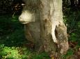 Anebo medvěd, je jich tady všude dost a některý jsou i dřevění...Nebo je to snad vůl? Kdo ví.