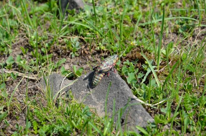 V Geghamách žije i tento obrovský hmyz.