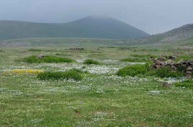 Opět nové kvítí, a to jsem vás ještě některých květinových fotek ušetřil. Počasí se v průběhu celého dopoledne zhoršovalo, a nyní už jen čekáme, kdy nás mlha zcela pohltí (dočkáme se při nejbližší pauze na pití).