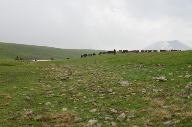 ... zatímco nám průzračnou vodu v potoce krásně zahnojí nově příchozí krávy. Tito pastevci jsou prvními lidmi, které vidíme od včerejšího oběda.