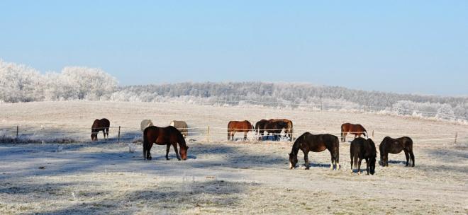 Nad stádem koní...