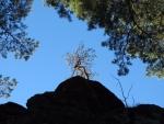 Bonsaj na vrcholku skalní věže.