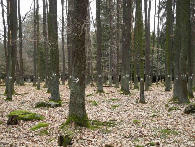 I stromy mají svá čísla.