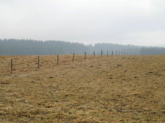 Pastviny patří ke koloritu Pošumaví.