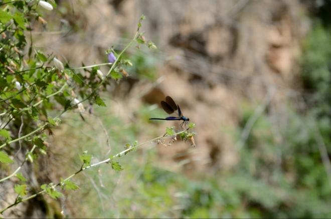 ... a zajímavý hmyz, mnoho různých druhů.