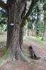 Arboretum s mnoha douglaskami.