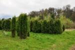 Libosad. V letech 1630-34 nechal společně s barokním letohrádkem Albrecht z Valdštejna založit i velkou zahradu s oborou o rozloze 2 ha. Zahrada kolem letohrádku se vyznačovala parkovou úpravou s květinovými záhony, několika altánky a vodotrysky. Na tuto část pak navazovala užitková zahrada a obora. Dnes v parku rostou jak jehličnaté tak i listnaté stromy. (Mapy.cz)