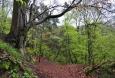 Příhrazské skály jsou přírodní rezervací...