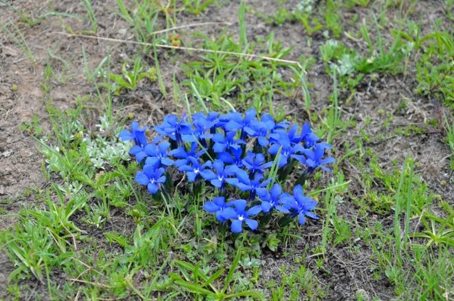 Mé oblíbené modré květiny rostou i zde.