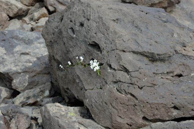 Kvítí v kameni
