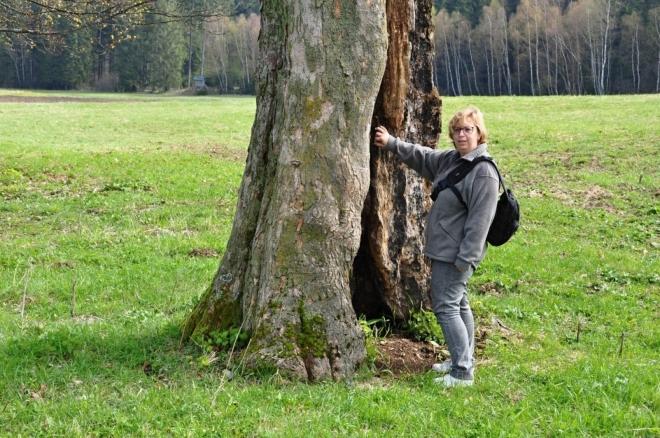Osamocené stromy již něco zažily...