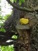 Sírovci žlutooranžovému vlhké jaro svědčilo. Jde o jedlou houbu, ale nikdy jsem jeho chuť nezkusil. Možná jsme ho mohli zkusit grilovat.