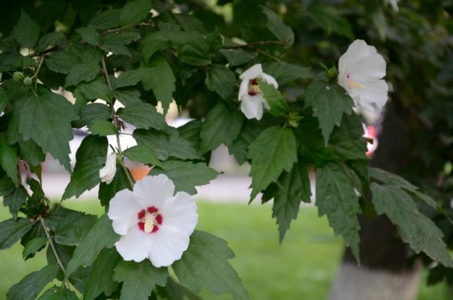 Květiny v parku