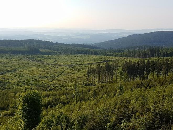Po orkánu Kirill se les na Knížecím stolci pomalu zotavuje. Je jeho štěstím, že zde není bezzásahová l. zóna. Takto byl vysázen smíšený les s buky a smrky.