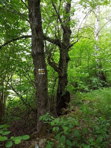 Žlutá stoupá od Tisovky ke Ktišské hoře.