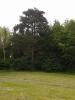 Dalším chráněmým stromem je mohutná borovice černá.