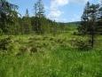 Procházíme mokřady prameniště Puchéřského potoka.