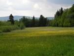 PR Pod Farským lesem chrání louky a nivy potoků pod Křišťanovem.