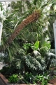 Skleník s teplomilnými rostlinami.