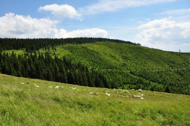 Pod Světlým vrchem vede turistická značka od Klínových k Friesovo boudám.