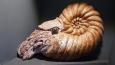 Zajímavou výstavu doplňují nalezené fosilie či makety dávno vyhynulých živočichů.