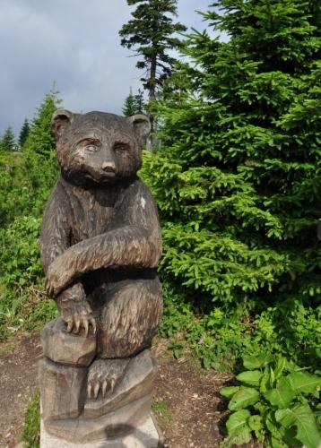 Koridory medvědům z Karpat uzavřely cesty a dálnice. Proč jim tedy zpět nepomoci? Pár by se jich v lesích Krkonoš, ale i v jiných horách jistě ztratilo. Vždyť na Slovensku jsou téměř všude.