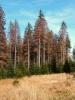 Takhle to vždycky začíná, vlastně pro tento les končí . . .
