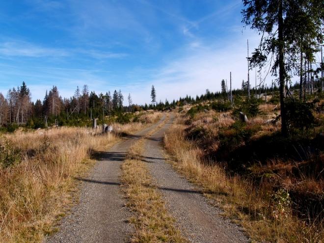 Tady byly jen lesy a dle mínění některých i znovu brzy budou. Spíš se ale dají čekat jen pláně, pláně a pláně. Nebo se snad samy zalesňují podobně odlesněné plochy na Knížecích Pláních, u Kvildy, Borové Lady a jinde?