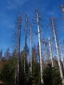 Pamatuju si doby v začátku 90let, kdy jsme na hraničních hřebenech vídali první stromy a později i kolečka uschlých stromů. Kolem byl ale všude vysoký letitý les. Nikdo z nás tehdy netušil, že tahle rychlá změna je vůbec možná.