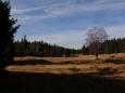 Dole nic nenasvědčuje kalamitě. Krajina u Rokyteckých slatí je opravdu krásná. Suchá tráva jen zvýrazňuje její klid a samotu.