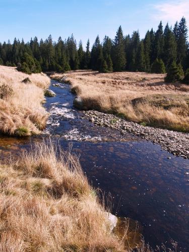 Na jedné straně ubíhá v točivých zákrutách Roklanský potok směrem k Javoří pile.