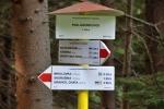 Vrchol Javorková se podchází a hřeben se zvolna zvedá ke Skorušině. Jdeme smrkovým lesem.