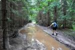 Hřebenovou cestu využívají pro těžbu stromů a tak občas musíme hledat průchod suchou nohou.