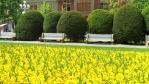 Jaro v Temešváru